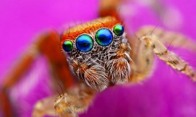 ملف مصور .. قدرات خيالية لكائنات صغيرة وبسيطة