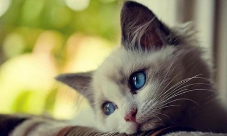 """إستدعاء مدير نادي الجزيرة لسماع أقواله في """"مذبحة قطط نادى الجزيرة"""""""