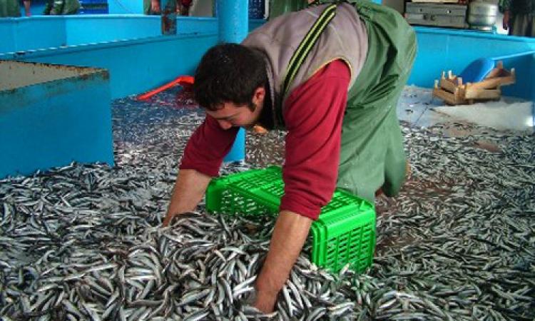 منطقة خدمات متكاملة للصيادين على بحيرة اسوان