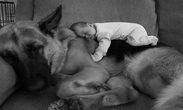 بالصور .. علاقة حب بين الأطفال و الكلاب