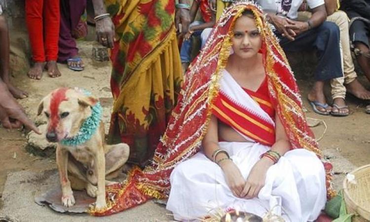 """بالصور.. صدق أو لا تصدق .. عائلة تزوج ابنتها لـ""""كلب ضال"""" لطرد النحس!!"""