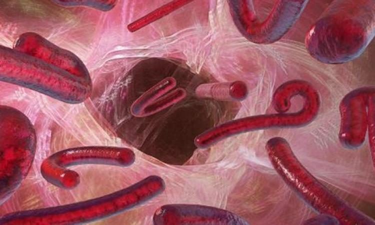 منظمة الصحة العالمية تدعو لاستخلاص علاج إيبولا من الدم