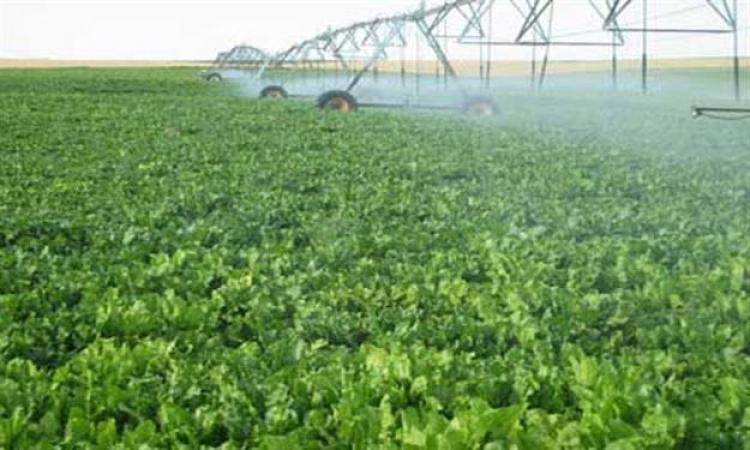 """""""الزراعة"""": خطة استخدام """"النانو"""" في استصلاح المليون فدان أمام السيسي"""