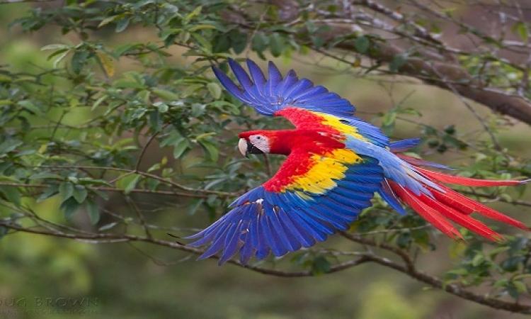 أروع وأجمل الطيور .. تعرف عليها واستمتع بجمال ألوانها  !!