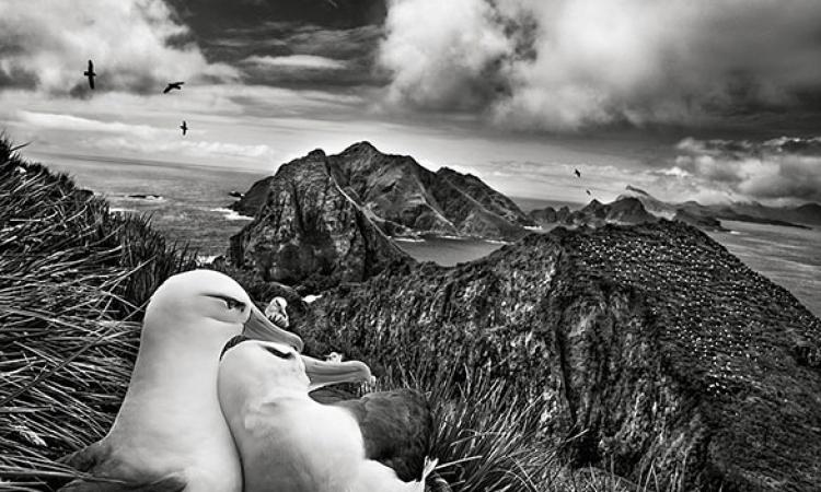 صور خاطفة لسباستياو سلغادو