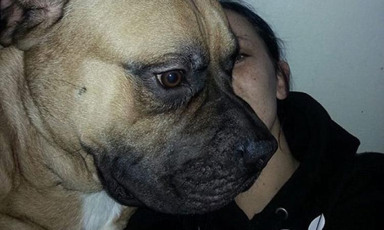 سيلفي الكلاب يجمع تبرعات بـ1.2 مليون جنيه إسترلينى