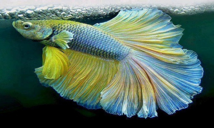 بالصور .. روعة الأسماك الملونة في عالم البحار