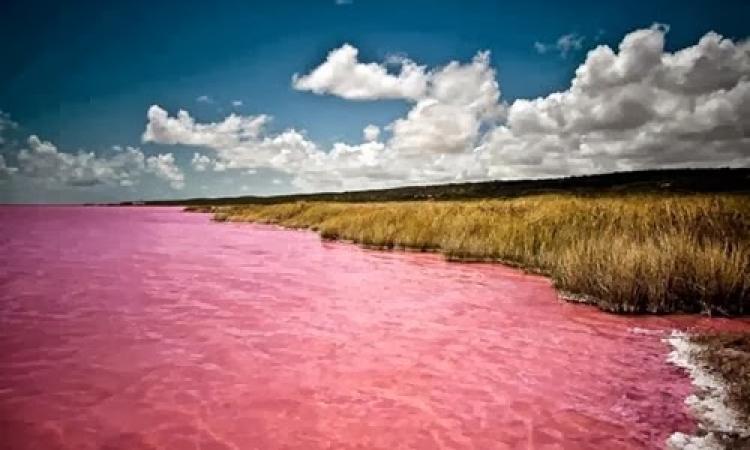 شاهد بالصور : أغرب بحيرة وردية زاهية اللون بالعالم !!