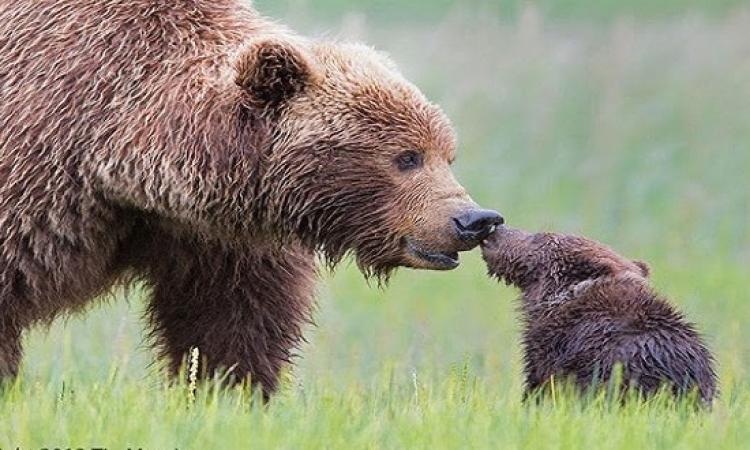 بالصور.. شاهد حنان الأم في عالم الحيوان !!