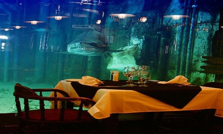 بالصور .. الأكل داخل قطار أو كهف والقرش يراقبك .. مطاعم غريبة بجنوب أفريقيا !!