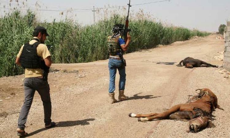 الحيوانات النافقة المفخخة .. أسلوب إرهابي جديد لداعش