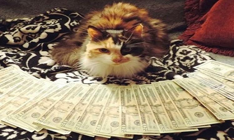 """بالصور..  قطط ثرية بين الدولارات على  إنستغرام """"instagram"""""""