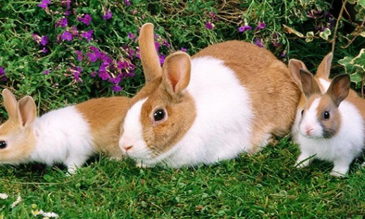 شاهدوا بالصور .. جزيرة الأرانب باليابان