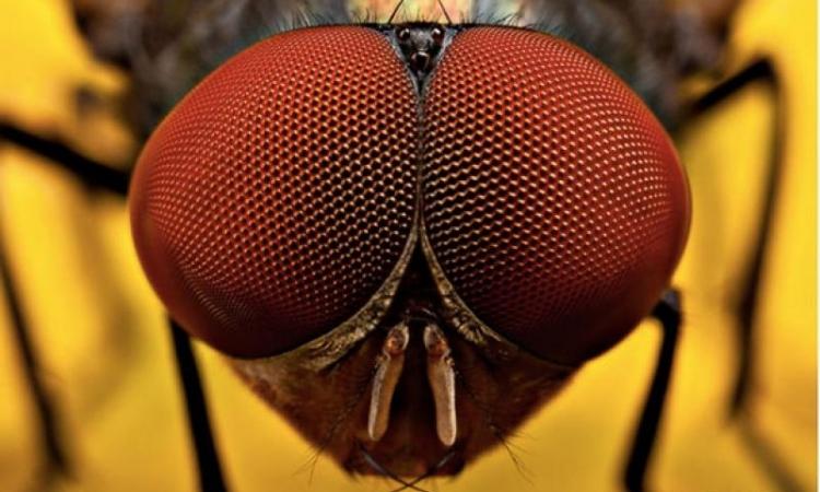الطريقة المثلى للتعامل مع لدغات حشرات بالحدائق؟