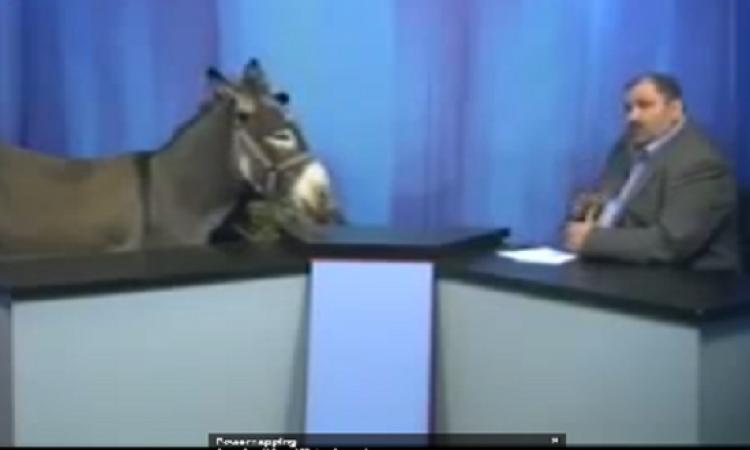 بالفيديو..قناة أردنية تستضيف حمارا في برنامج سياسي