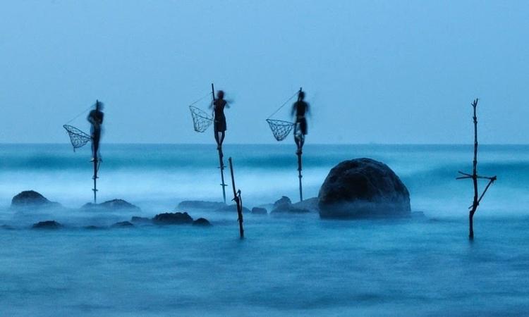 بالصور .. أغرب عادات الصيادين .. الصيد على العصى فى سريلانكا