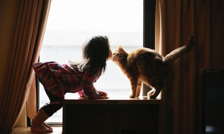 بالصور .. لحظات دافئة بين الأطفال والقطط