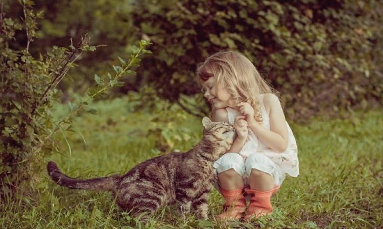 بالفيديو.. أصحاب الكلاب واثقون من أنفسهم والقطط قلقون دائمًا وكلاهما عاطفى جدًا