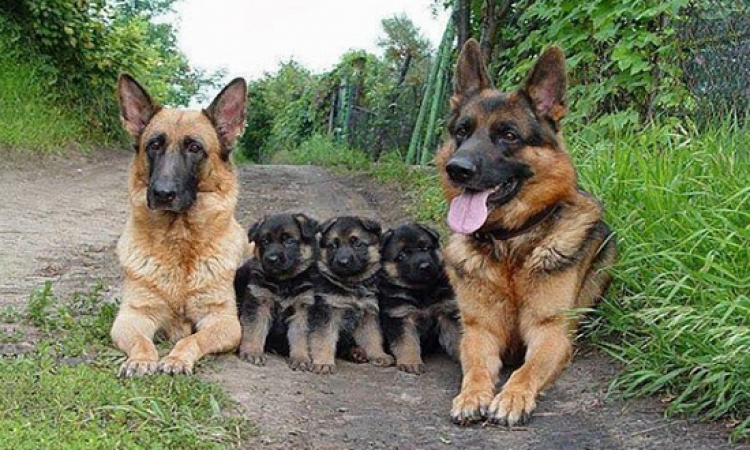شاهد الترابط الأسرى في .. صور عائلية للحيوانات !!
