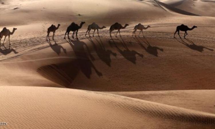 جوجل تغزو الصحراء العربية على ظهر جمل