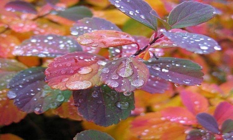 بالصور .. جمال الألوان الطبيعة فى فصل الخريف