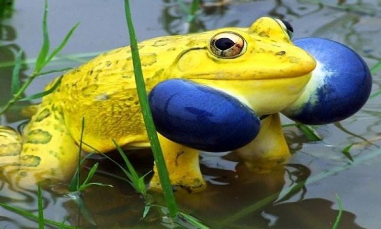 شاهد أجمل الكائنات الحية بالوان رائعة
