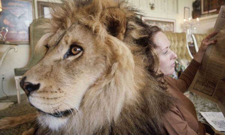 """بالصور.. عائلة تتبنى """"أسد"""" ليصبح حيوانها الأليف"""
