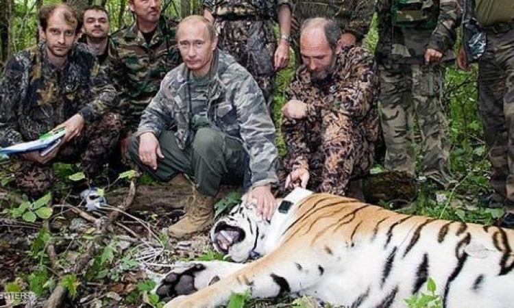 بعد أن أطلقه .. نمر بوتين يهاجم فراخ الصين
