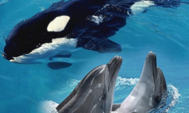 الدلافين والحيتان كائنات مختلفة بلغة واحدة !!