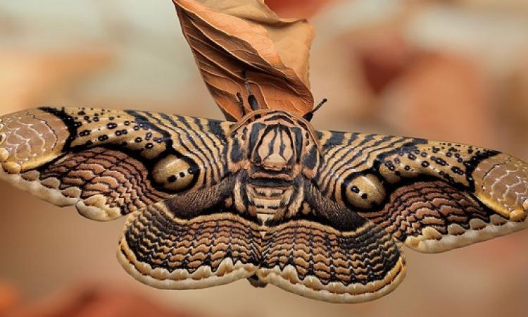 بالصور .. سبحان الله فى خلق اشكال الفراشات