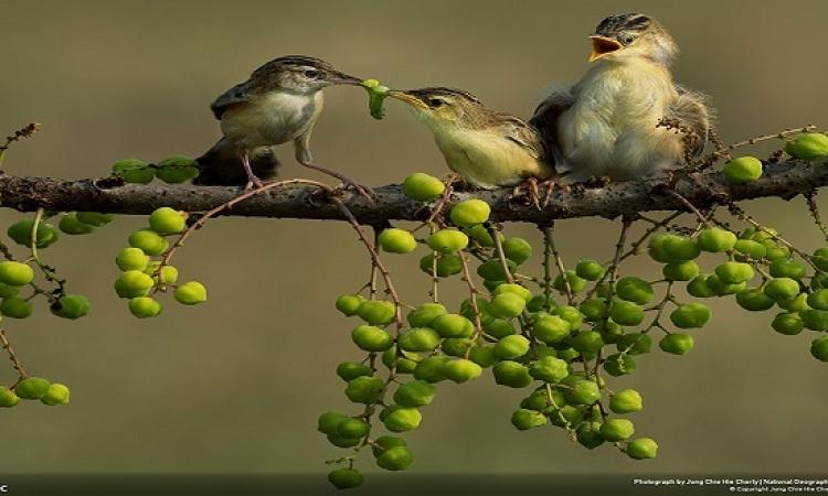 """ National Geographic "" ..  أفضل صور الطبيعة لعام 2014"