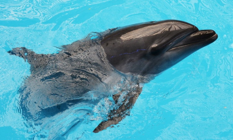 الدلافين تشعر بالحقول المغناطيسية