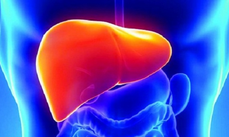 أمراض الكبد تحصد أرواح 1.4 مليون شخص سنويًا