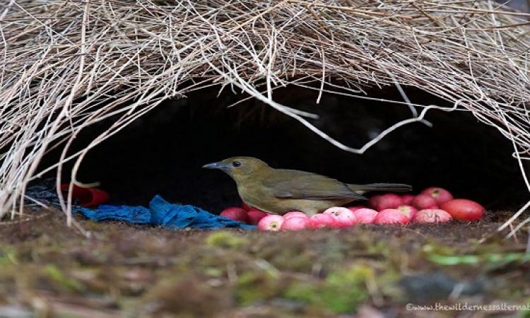 بالصور .. أجمل بيوت الطيور البرية التي تبنيها لنفسها