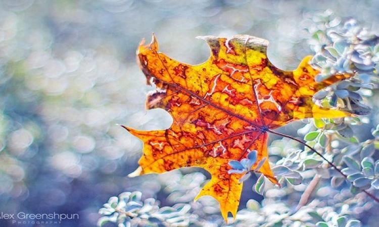 بالصور .. شاهد سحر الخريف وجمال أوراقه المتساقطة