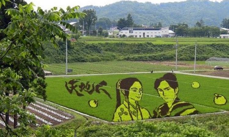 بالصور .. قرية يابانية تحترف الرسم بحقول الأرز !!