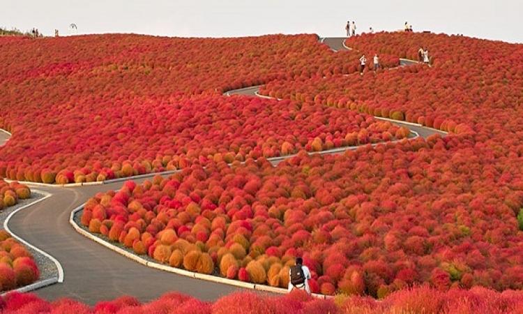 بالصور .. أروع الوان للأشجار خلال فصل الخريف