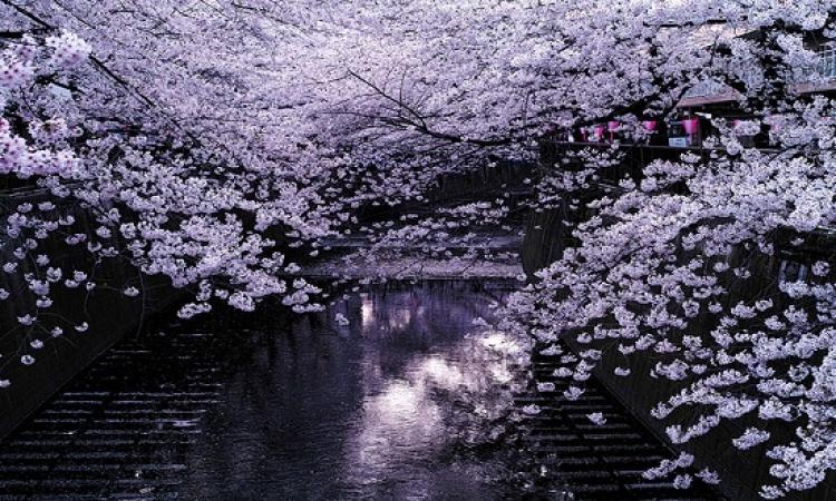 شاهد روعة وجمال اشجار اليابان .. لما الشتا يدق البيبان