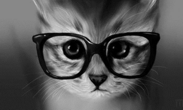 بالصور .. اكتشف اليابان من خلال عيون القطط