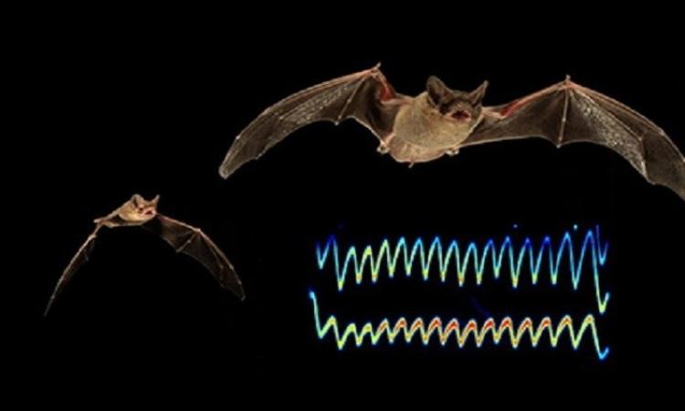 تعلم من الخفافيش .. كيف تصطاد دون أن تقع فريسة؟