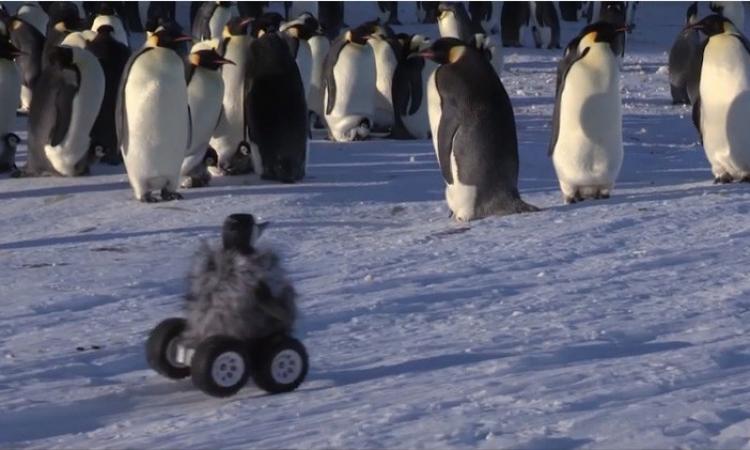 بالفيديو.. اختراع روبوت للتجسس على طيور البطريق