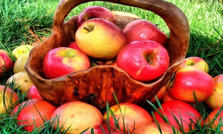 فى العيد الرسمى له.. تعرف على 5 استخدامات للتفاح فى مصر