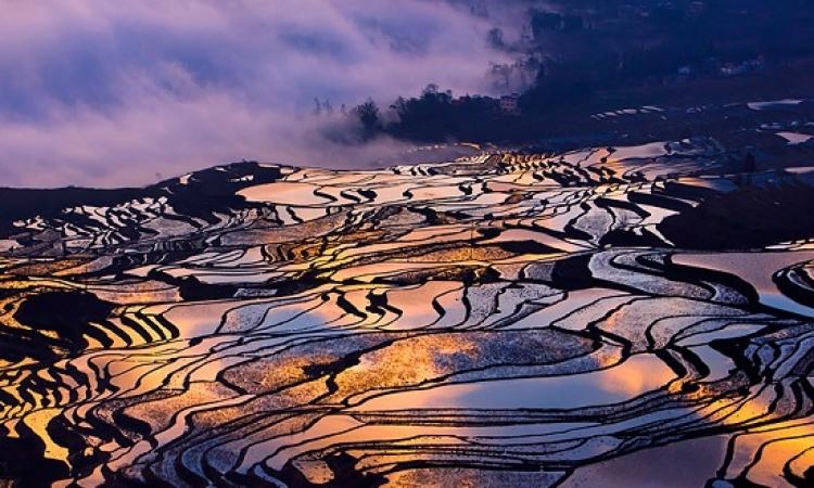 بالصور .. حقول الارز الصينية تبدو كلوحات بديعة من الزجاج الملون