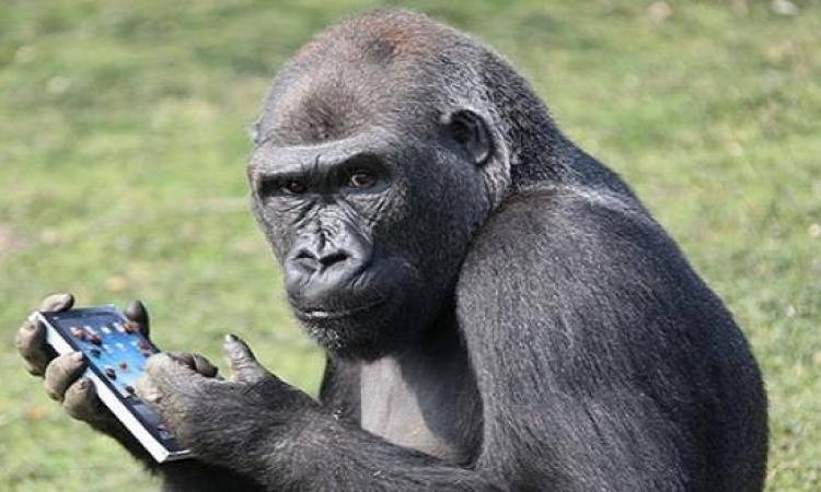 """صدق أو لا تصدق .. الصينيون يدربون """"القردة"""" على مهارات التعرف بالذات"""