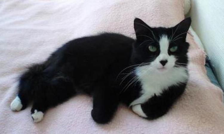كوكى قطة وفية زى الكلب قطعت 1000 كيلو بحثًا عن صاحبتها