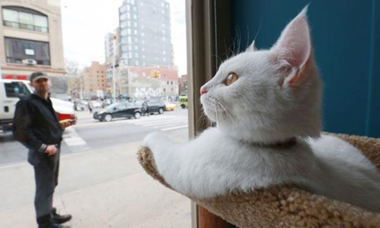 مؤسسة فرنسية تطلق حملة لإيواء الكلاب والقطط خلال الشتاء