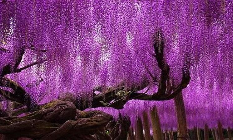 الغريب والمبهج والممتع ترسمه الطبيعة فى لوحات أشجارها
