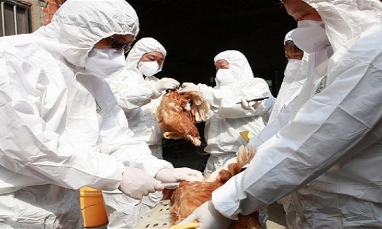 اكتشاف الحالة الثامنة بأنفلونزا الطيور لطفل ٦ سنوات بأسيوط