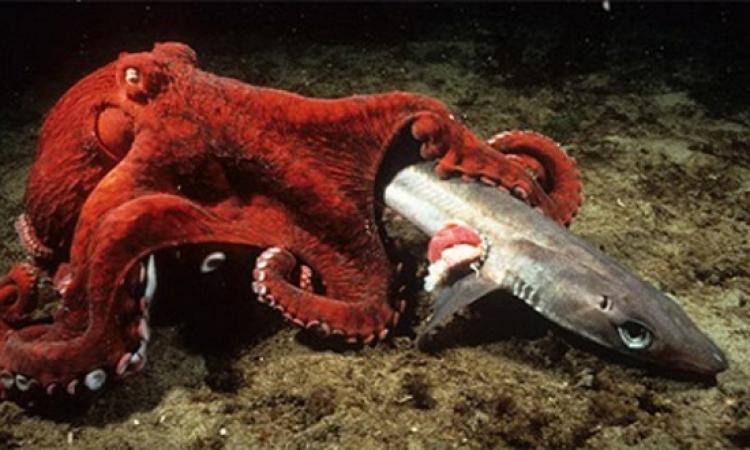 بالصور .. أجمل وأكبر المخلوقات البحرية على وجه الأرض