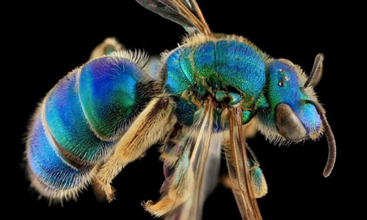 بالصور.. باحث .. حاول إنقاذ النحل بطريقته الخاصة
